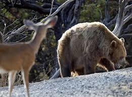 Bear and the Deer